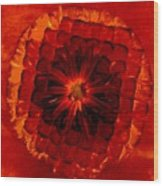 Daisy Red Abstract Wood Print