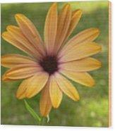 Daisy Smiles Wood Print