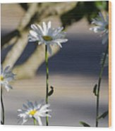 Daisy Soldiers Wood Print