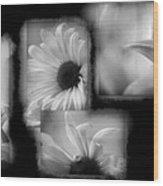 Daisy Study Wood Print