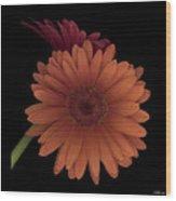 Daisy Tilt Wood Print