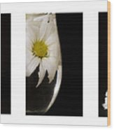 Daisy Triptych Wood Print