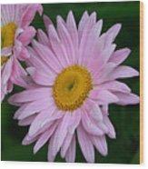 Daisy Twins Wood Print
