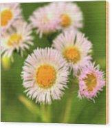 Daisy Weeds Wood Print