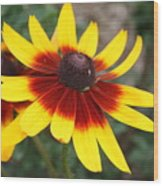 Daisy With A Question Mark Wood Print