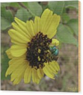 Daisy With Blue Bee Wood Print