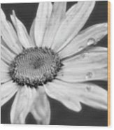 Daisy With Raindrops In Black And White Wood Print