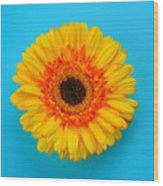 Daisy - Yellow - Orange On Light Blue Wood Print