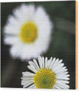 Daisys Wood Print