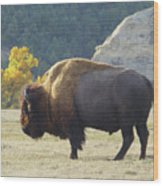 Dakota Badlands Majesty Wood Print