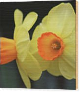 Dallas Daffodils 07 Wood Print