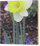 Dallas Daffodils 20 Wood Print