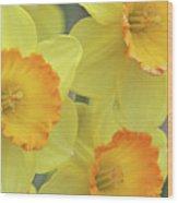 Dallas Daffodils 24 Wood Print