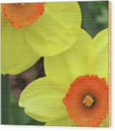 Dallas Daffodils 36 Wood Print