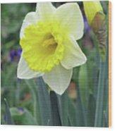 Dallas Daffodils 64 Wood Print