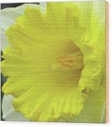 Dallas Daffodils 72 Wood Print