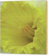 Dallas Daffodils 73 Wood Print