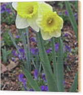 Dallas Daffodils 78 Wood Print