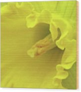 Dallas Daffodils 91 Wood Print