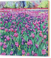Dallas Tulips Wood Print