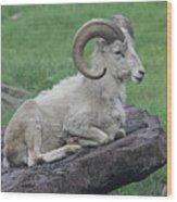Dall's Sheep Wood Print