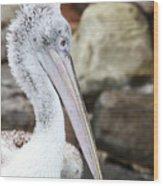 Dalmatian Pelican Wood Print