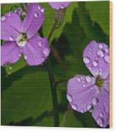 Dame's Rocket Raindrops#2 Wood Print
