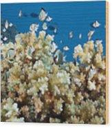 Damselfish Among Coral Wood Print by Dave Fleetham - Printscapes