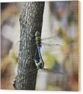 Dragonflies Need Love Too Wood Print