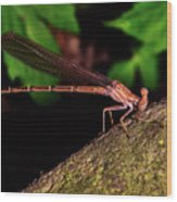 Damselfly 006 Wood Print