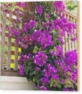 Dance Of The Bougainvilla Wood Print