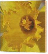 Dance Of The Daffodil Wood Print