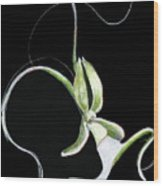 Dance Of The Ghost Orchid Wood Print