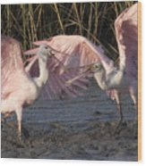 Dance Of The Spoonbill Wood Print
