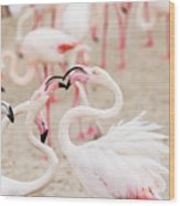 Dancing Beak To Beak Wood Print