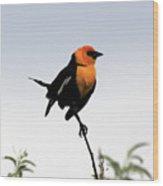 Dancing Blackbird Wood Print