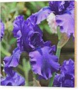 Dancing Blue Irises Wood Print
