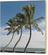 Dancing Coconut Tree Wood Print
