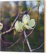 Dancing Dogwood Blooms Wood Print