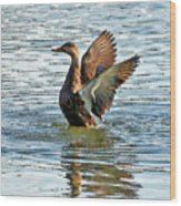 Dancing Duck Wood Print