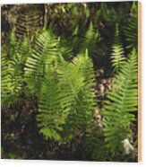 Dancing Ferns Wood Print