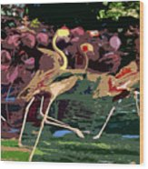 Dancing Flamingos  Wood Print