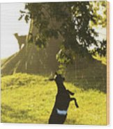 Dancing In The Rain Wood Print by Thomas R Fletcher