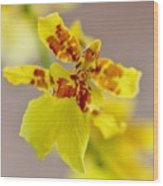 Dancing Lady Orchid Wood Print