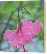 Dancing Lady Pink Hibiscus Wood Print