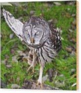 Dancing Owl Wood Print