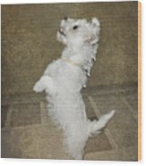 Dancing Puppy Wood Print