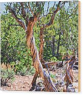 Dancing Trees Wood Print