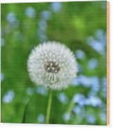 Dandelion 1 Wood Print