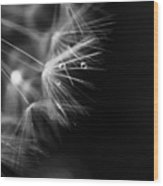 Dandelion 2 Bw Wood Print